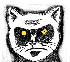 Angry-cat-glare.png