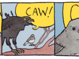 Annoyed Bird