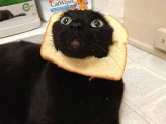 Breading-cats-Q016.jpg