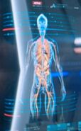 Kelpien internal medical scan