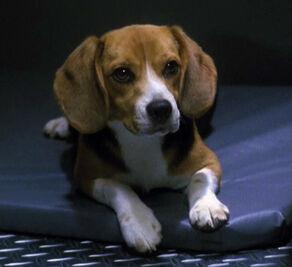 Porthos, a Terran dog