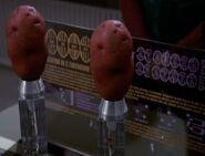 Cloned potato