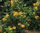 Psychotropic flowers