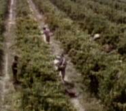 Vineyard workers 2