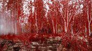Nibiru forest