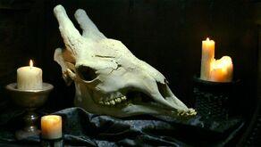 The skull of a Xindi-Avian (2154)