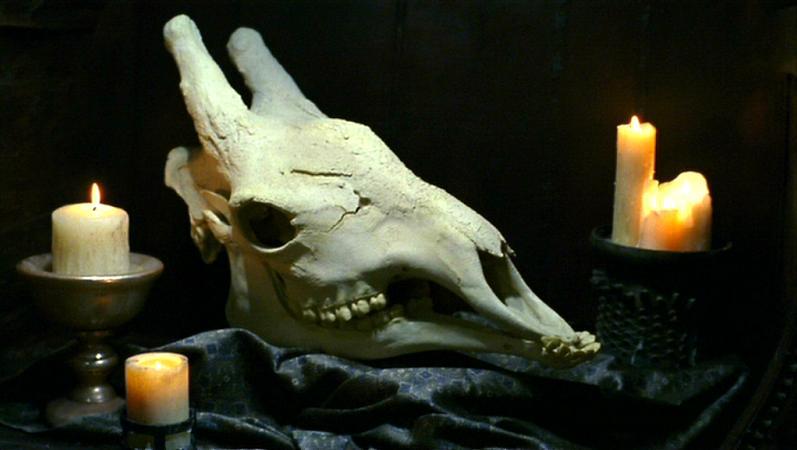 Зинди-птицоиды