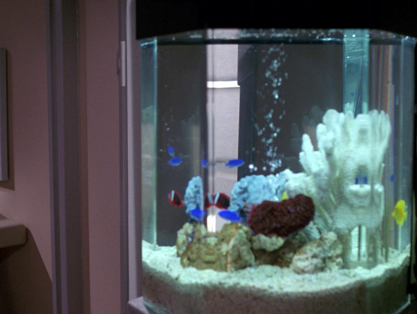 Aquarium in Trois Quartier.jpg