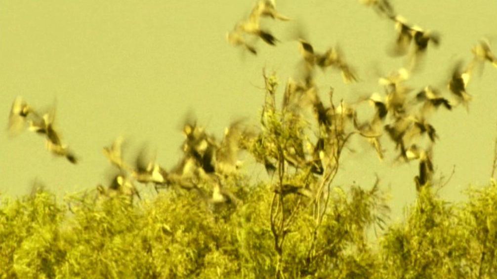 Risianische Vögel.jpg