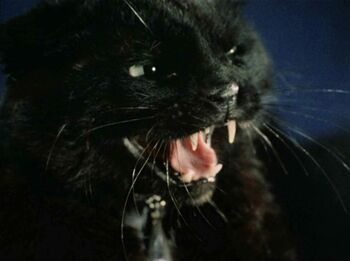 In the form of a black cat