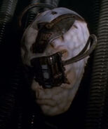 Borg corpse 1, 2373