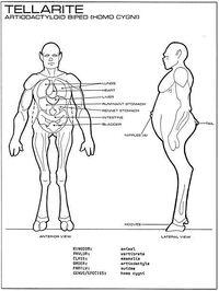 Tellarite anatomy