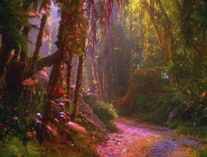 Forest of Forever.jpg