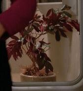 Small tree aboard the Enterprise-D, 2364