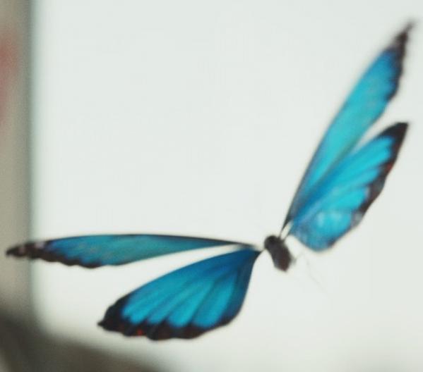 Mariposa de Coppelius