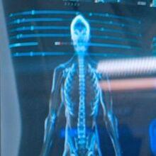 Kelpien skeletal structure.jpg