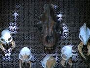 Hirogen trophy wall