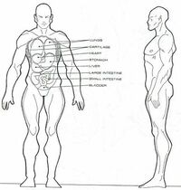 Vulcan anatomy