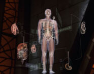 Human anatomy, 2153