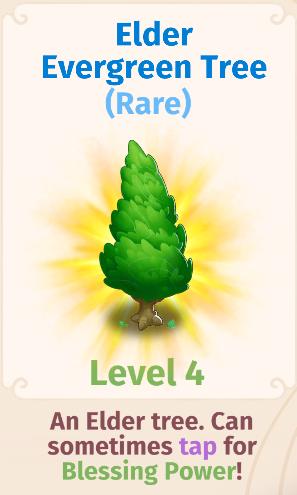 Elder Evergreen Tree