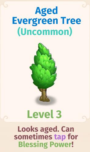 Aged Evergreen Tree