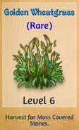 Golden Wheatgrass