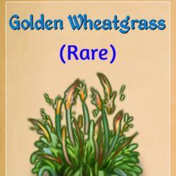 GoldenWheatgrass.jpg
