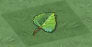 Dragon Tree Leaf