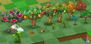 Fruit Trees Family