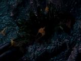Mortaeus flower