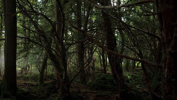 Darkling Woods