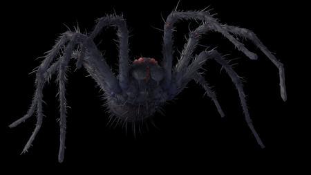 Balorian spider