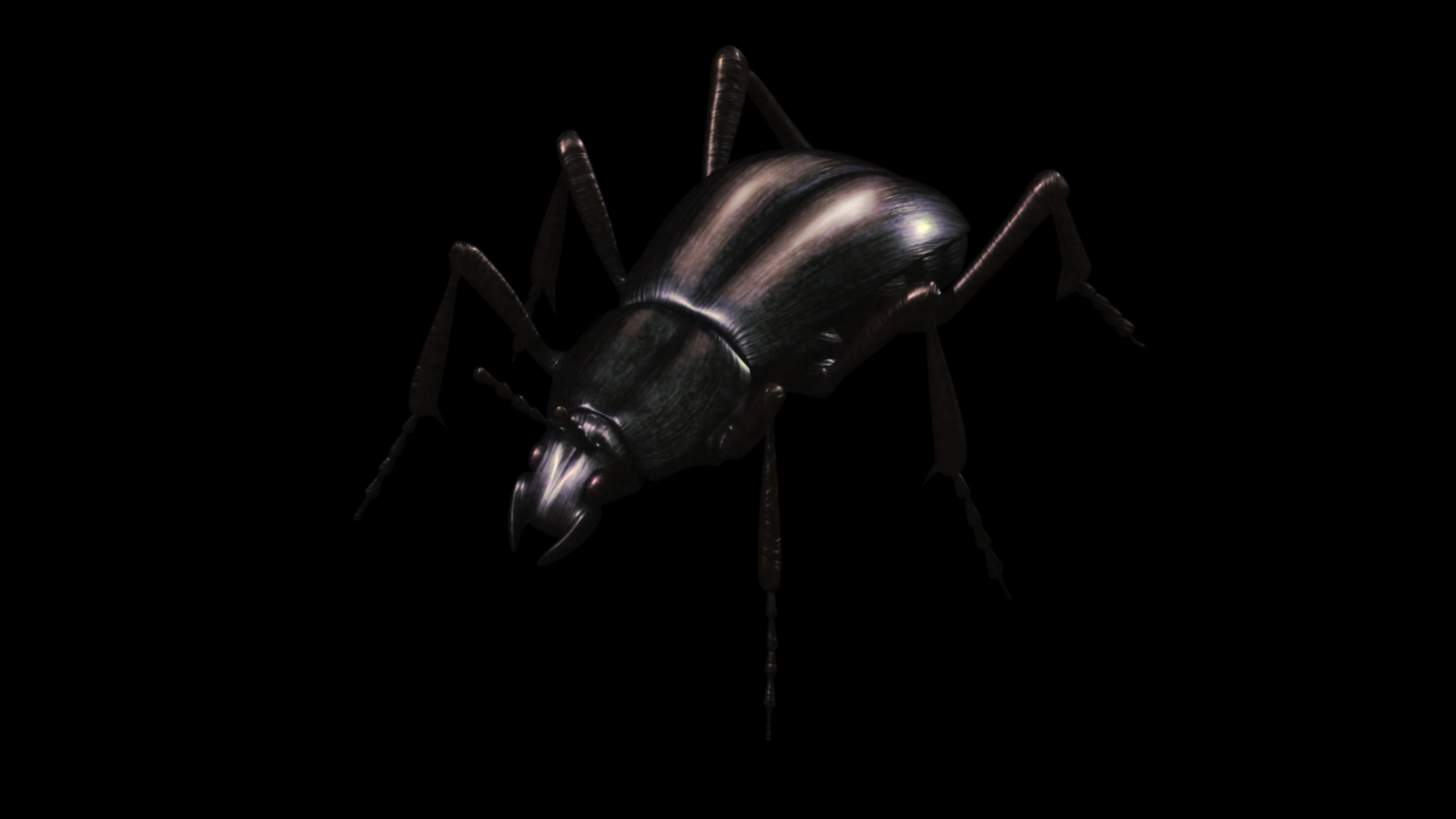 Elanthia Beetle