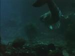 Miranda Underwater