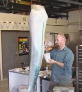 Aquamarine Tail Coloring