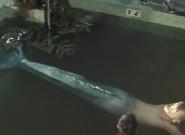 Aquamarine Training to Swim