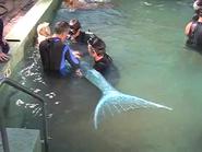Aquamarine Pool Training