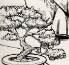 Life-tree