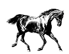 Elven Horses