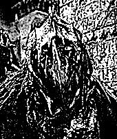 Scavenging Moria Goblin 1.png