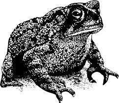 Gorgoroth toads