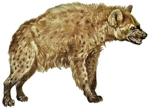 Cave Hyenas
