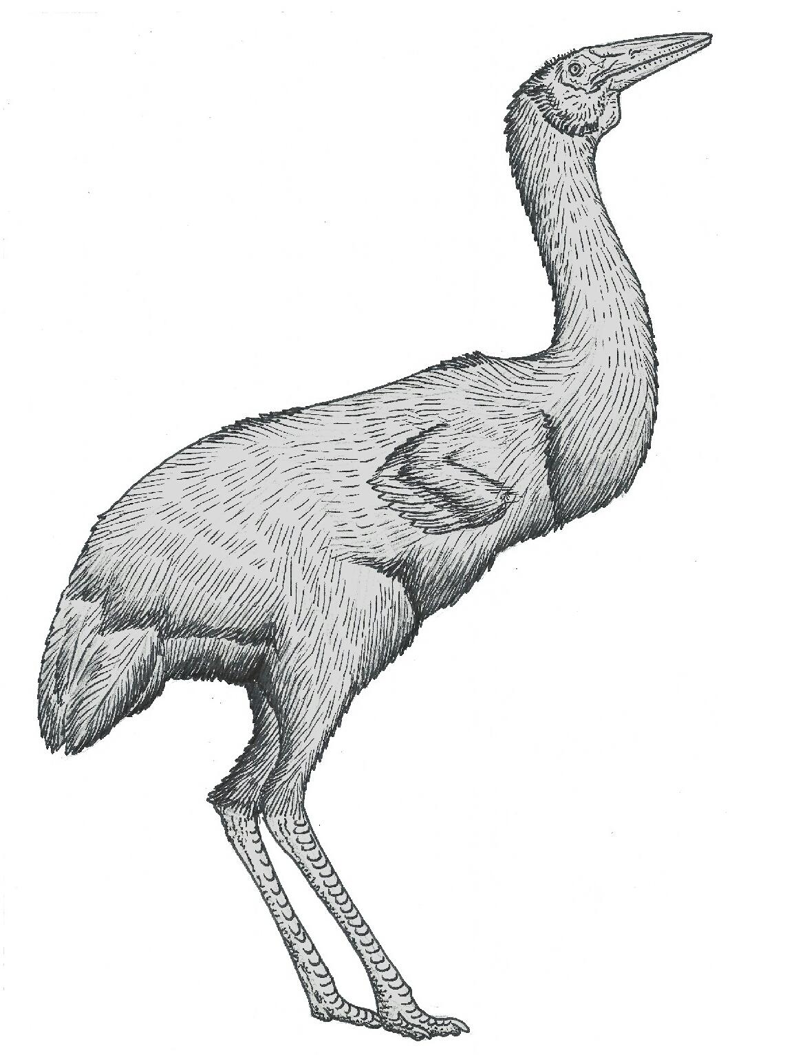 Chamber birds