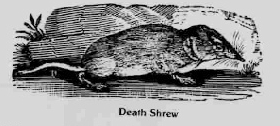 Death shrew