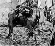 Bill the Pony