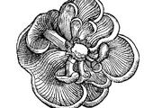 Kingsland's Mushroom