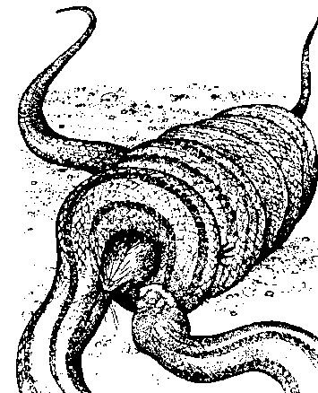 Petlavi