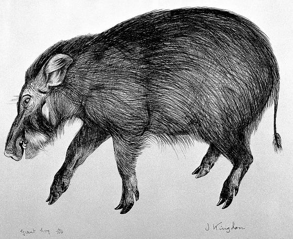 Great Boars of Rhûn