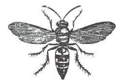 Harvest flies