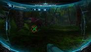 Rainforest - Examine fern